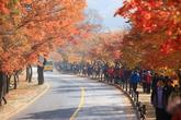 Mt. Naejangsan..