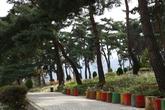 Okjeongho Lake Siberian Chrysanthemum Theme Park