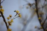 Sansuyu Village-Cornelian Cherry Flowers Village in Ichen