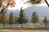 Ulsan Taehwagang Park