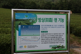 Gangjin Dawon , Tea Plantation, Tea Farm