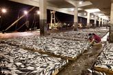 Yeosu Gukdong Fishing Complex