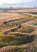Suncheonman Reeds Field
