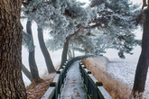 A Snowy Pine Road