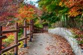 Cheoram Fall Foliage Habitat
