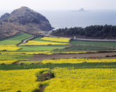 Jeju Island in Spring 