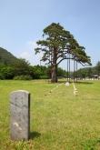Jeongipum Pine Tree