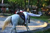 Equestrian Performances