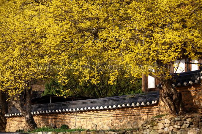 Suncheon Songgwangsa Temple