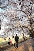영등포 여의도 봄꽃축제