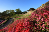 Gongsanseong Fortress in Spring