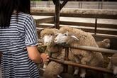 Daegwannyeong Yangdde Farm