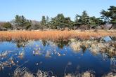 Seochulji Pond