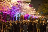 2019 영등포 여의도 봄꽃축제