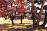 Autumn of Deoksugung Palace
