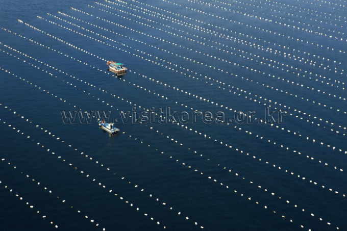 Sea Farms in Yeosu