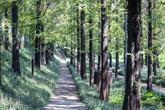 광주 맥문동 숲길
