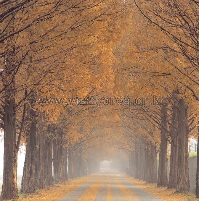 Metasequoia Street 