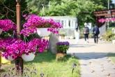 들꽃 수목원
