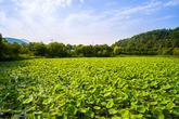 Gyeongancheon Wetland Ecological Park
