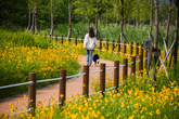 요천생태습지공원