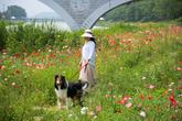 Osu Loyal Dog Tourist Area