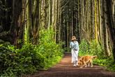 안돌오름 비밀의 숲