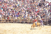Cheongdo Bull's Fighting Festival