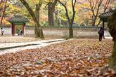 Autumn of Changdeokgung Palace