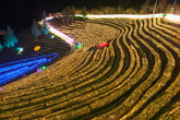 Boseong Tea Farm Light Festival