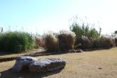 Suncheon Bay Wetland