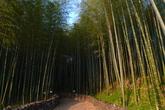 Bamboo Theme park