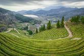 Boseong Tea Plantation Observatory