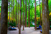 Jangtaesan Natural Forest