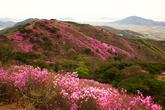 Mt. Goryeosan