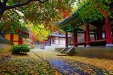 Autumn Hues of Chaemijeong Pavilion