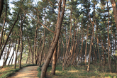 Janghang Pine Forest Park