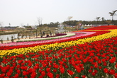 Taean Flower F..