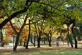 Autumn of Changgyeonggung Palace