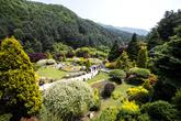 The Garden of Morningcalm