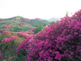 Mt. Jirisan