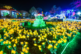 Jeju Light Garden