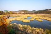 Zhengyang Wetland