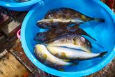 Jumunjin Fish Market