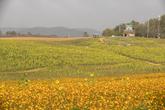 보리나라 학원농장