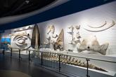 Jangsaengpo Whale Museum