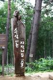 자작나무숲_원대..