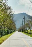 Gurye Seomjingang Cherry Blossom Path