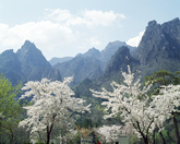 Mt. Seoraksan in Spring 