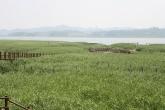 신성리갈대밭
